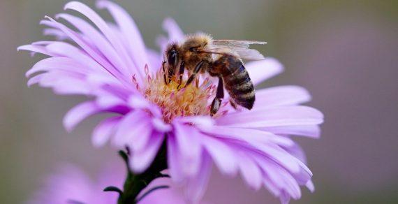 Les avantages du miel bio